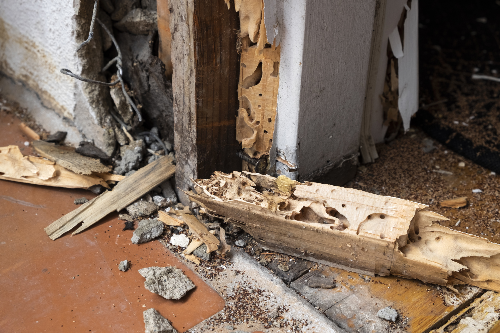 4 Signs of Termite Infestation We Woodint Ignore if We Were You