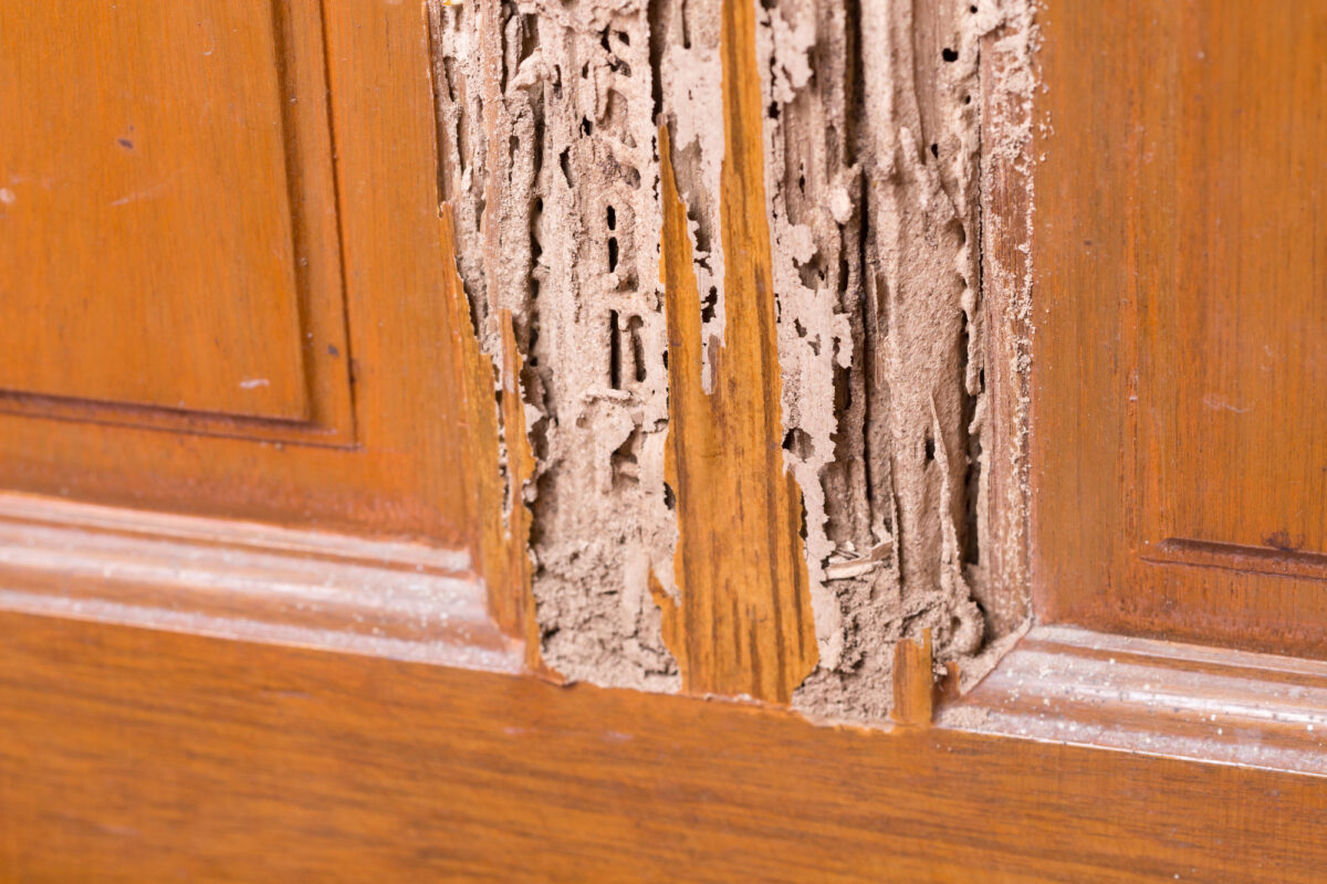 6 Factors to Consider When Choosing a Termite Control Service