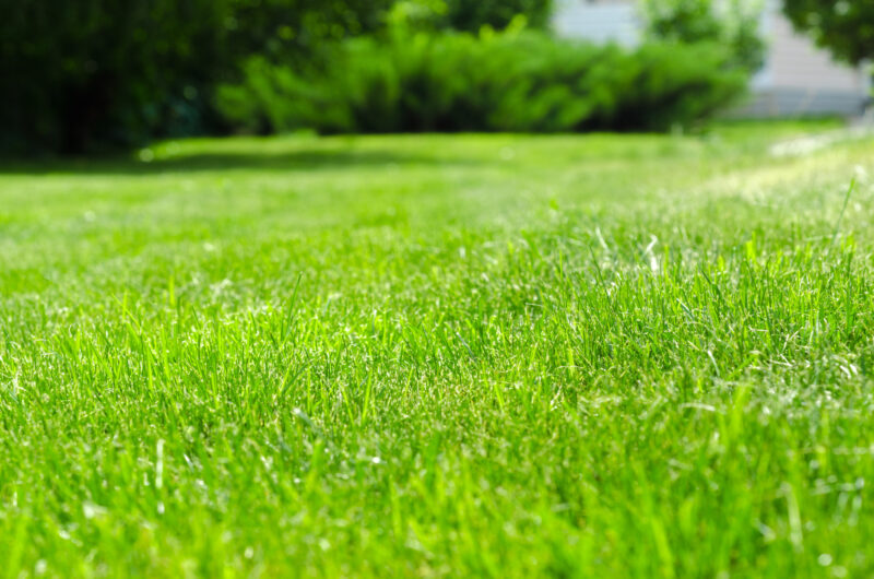 How to Get a Greener Lawn: A Homeowner's Guide