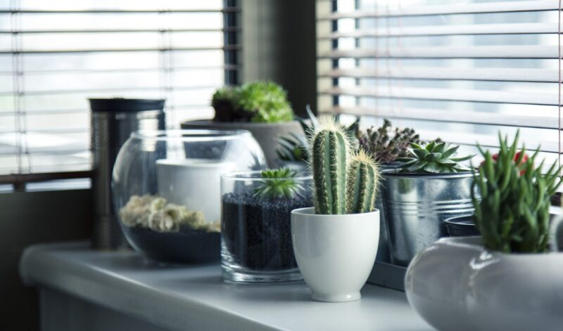 Flexing Your Green Thumb: Tips and Tricks on How to Water Succulents
