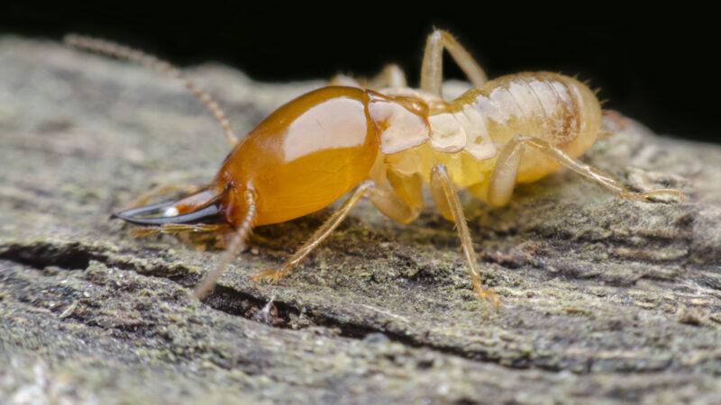 A Brief Guide to Termite Prevention